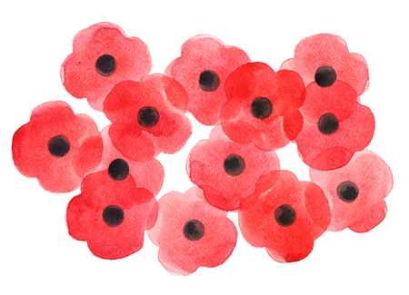 centenary: Watercolor poppy flower, Remembrance Day white background.