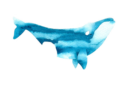 australis: Watercolor sketch of right whale. Illustration isolated on white background.
