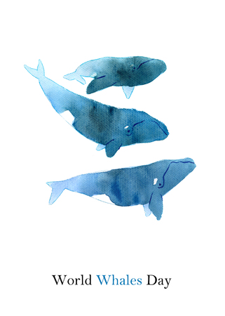 Watercolor sketch of right whale. Illustration isolated on white background