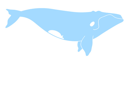 Vector illustration of a right whale isolated on white Ilustração