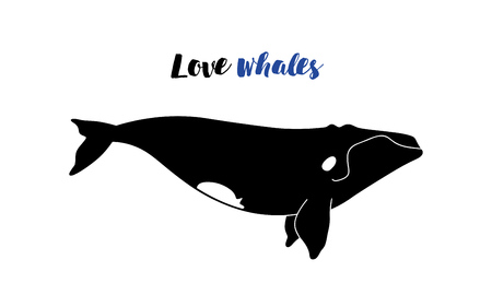 australis: Vector illustration of whale. Template poster with right whale