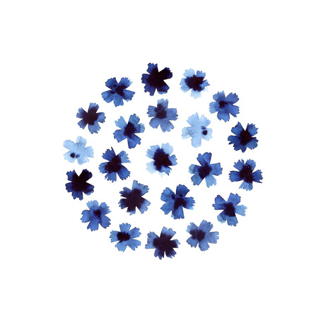 Cornflower composition isolated on white background Stock Photo
