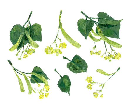 Flowers of linden with green leaves isolated on white. Oil painting illustration. Set of design elements Stock Photo