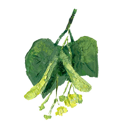 Flowers of linden with green leaves isolated on white. Oil painting illustration