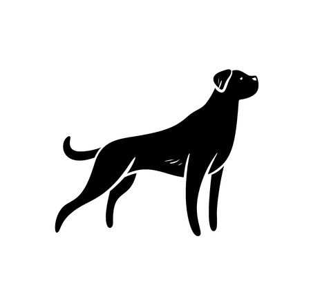 Vector silhouette of staying hunting dog, isolated on white background.