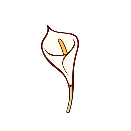 Vector Calla lily flower isolated on white background. Icon in flat style