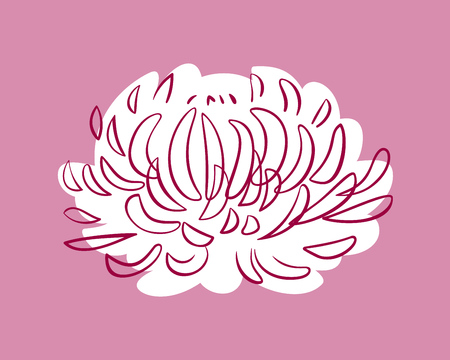 Pink Aster, soft and delicate colors, vector background