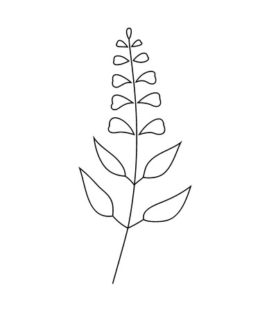 Vector illustration of sage with flower isolated on white background. Çizim