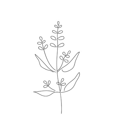 Vector illustration of sage with flower isolated on white background. Illustration