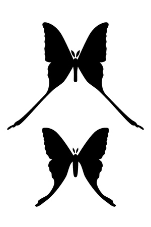 Comet moth vector isolated on white background. Male and female. Set of icon
