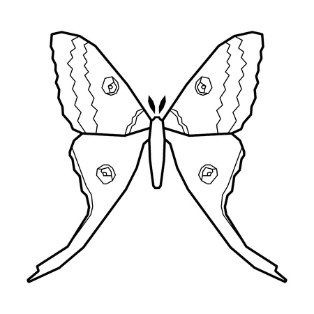 Comet moth vector icon isolated on white background. Female Ilustrace