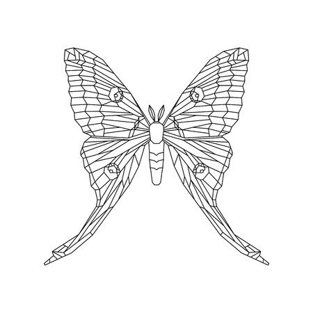 Comet moth vector illustration isolated on white background. Female