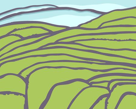 Vector rice or tea plantation on cascades field