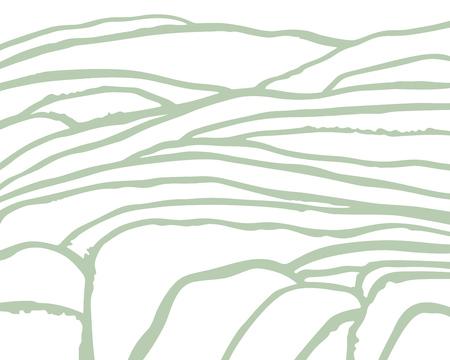 Riso vettoriale o piantagione di tè sul campo di cascate