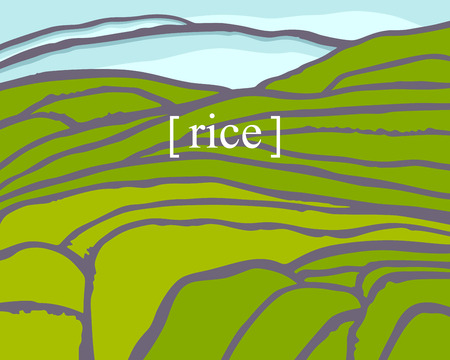 Rice fields. Plantation on cascades field. Rice title