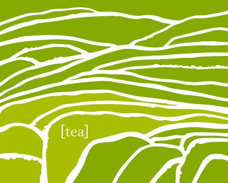 Tea plant fields. Vector tea plantation on cascades field. Tea title Illustration