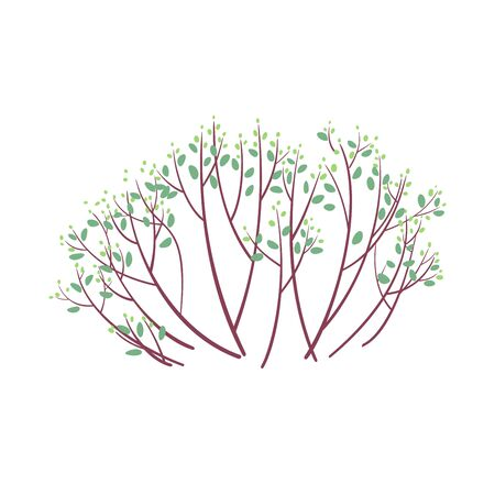 Spring bush with light green buds isolated on white background