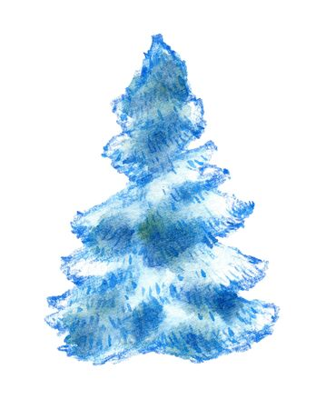 Spruce, christmas tree illustration, pencil and watercolor