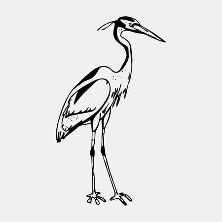 Hand-drawn pencil graphics, heron. Engraving, stencil style. Black and white logo, sign, emblem, symbol Stamp seal Simple illustration Sketch