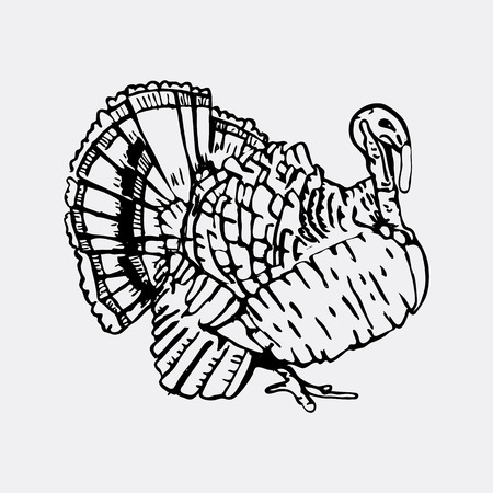 Hand-drawn pencil graphics, turkey. Engraving, stencil style. Black and white logo, sign, emblem, symbol Stamp seal Simple illustration Sketch Illustration