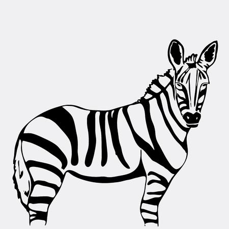 Hand-drawn pencil graphics, zebra. Engraving, stencil style. Black and white logo, sign, emblem, symbol. Stamp, seal. Simple illustration. Sketch. Illustration