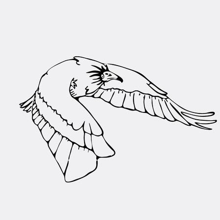 carrion: Hand-drawn pencil graphics, vulture, eagle, osprey, falcon, hawk, scavenger. Engraving, stencil style. Black and white logo, sign, emblem, symbol. Stamp, seal. Simple illustration. Sketch.