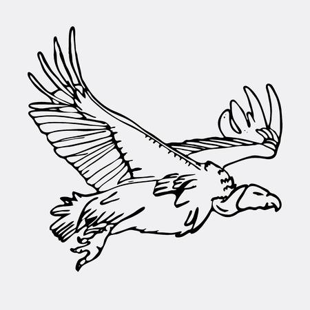 手描きの鉛筆のグラフィック、アフリカのハゲタカ、ホーク。彫刻、ステンシル スタイルです。黒と白のロゴ、記号、紋章、記号。スタンプ、シー  イラスト・ベクター素材