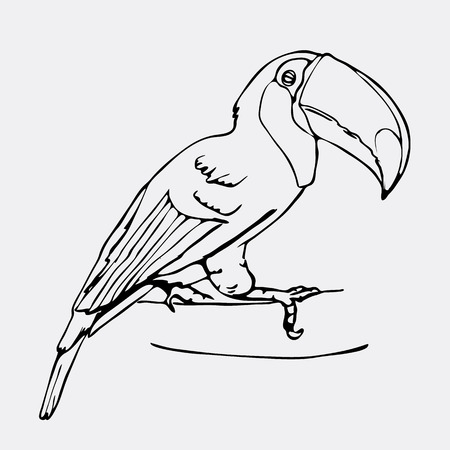 Hand-drawn pencil graphics, toucan bird. Engraving, stencil style. Black and white logo, sign, emblem, symbol. Stamp, seal. Simple illustration. Sketch.