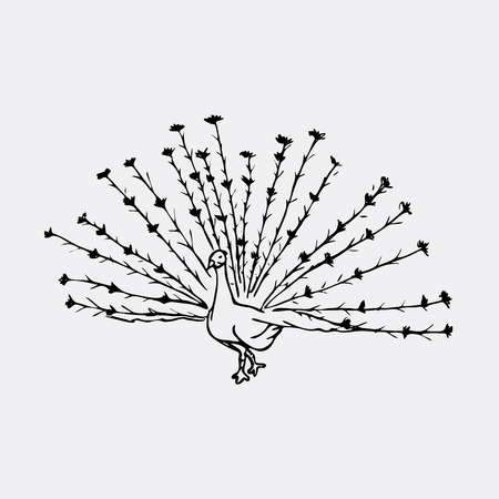 Hand-drawn pencil graphics, peacock bird. Engraving, stencil style. Black and white logo, sign, emblem, symbol. Stamp, seal. Simple illustration. Sketch. Illustration
