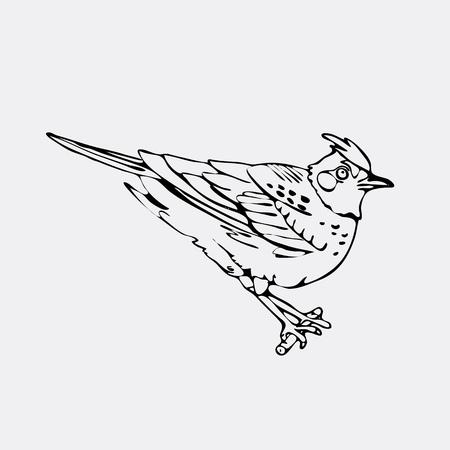 chickadee: Hand-drawn pencil graphics, lark, oriole, chickadee, sparrow, blackbird, nightingale, finch, bunting, hangbird. Engraving, stencil style. Black and white logo, sign, emblem, symbol. Stamp, seal. Simple illustration. Sketch. Illustration