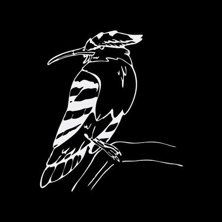 hornbill: Hand-drawn pencil graphics, hoopoe, hornbill bird. Engraving, stencil style. Black and white logo, sign, emblem, symbol. Stamp, seal. Simple illustration. Sketch. Illustration