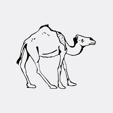 hardy: Hand-drawn pencil graphics, camel. Engraving, stencil style. Black and white logo, sign, emblem, symbol. Stamp, seal. Simple illustration. Sketch.