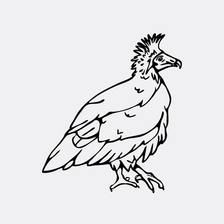 carrion: Hand-drawn pencil graphics, vulture, eagle, osprey, falcon, hawk, scavenger, neophron. Engraving, stencil style. Black and white logo, sign, emblem, symbol. Stamp, seal. Simple illustration. Sketch.