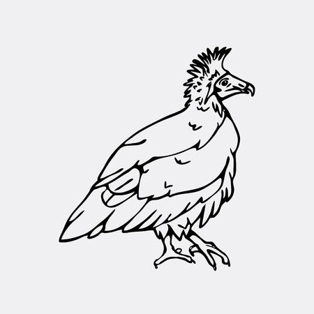 scavenger: Hand-drawn pencil graphics, vulture, eagle, osprey, falcon, hawk, scavenger, neophron. Engraving, stencil style. Black and white logo, sign, emblem, symbol. Stamp, seal. Simple illustration. Sketch.