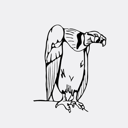 Hand-drawn pencil graphics, vulture, eagle, osprey, falcon, hawk, scavenger. Engraving, stencil style. Black and white logo, sign, emblem, symbol. Stamp, seal. Simple illustration. Sketch.