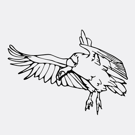 Hand-drawn pencil graphics, vulture, eagle, osprey, falcon, hawk, scavenger, griffon. Engraving, stencil style. Black and white logo, sign, emblem, symbol. Stamp, seal. Simple illustration. Sketch.