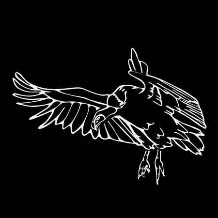 scavenger: Hand-drawn pencil graphics, vulture, eagle, osprey, falcon, hawk, scavenger, griffon. Engraving, stencil style. Black and white logo, sign, emblem, symbol. Stamp, seal. Simple illustration. Sketch. Illustration