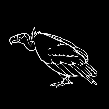 vulture: Hand-drawn pencil graphics, vulture, eagle, osprey, falcon, hawk, scavenger. Engraving, stencil style. Black and white logo, sign, emblem, symbol. Stamp, seal. Simple illustration. Sketch.