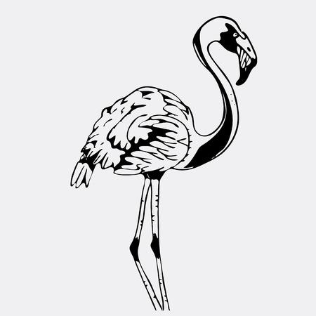 Hand-drawn pencil graphics, bird, flamingo. Engraving, stencil style. Black and white logo, sign, emblem, symbol. Stamp, seal. Simple illustration. Sketch.