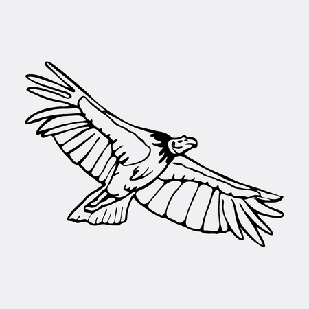 scavenger: Hand-drawn pencil graphics, vulture, eagle, osprey, falcon, hawk, scavenger, condor. Engraving, stencil style. Black and white logo, sign, emblem, symbol. Stamp, seal. Simple illustration. Sketch.