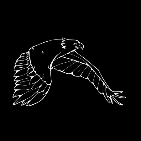 Hand-drawn pencil graphics, vulture, eagle, osprey, falcon, hawk, scavenger, condor, karkar, kite. Engraving, stencil style. Bird predator. Black and white logo, sign, emblem, symbol. Stamp, seal. Simple illustration. Sketch. Illustration