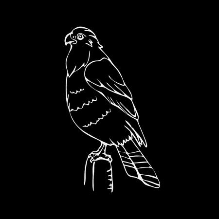 griffon: Hand-drawn pencil graphics, vulture, eagle, osprey, falcon, hawk, scavenger, condor, karkar, kite. Engraving, stencil style. Bird predator. Black and white logo, sign, emblem, symbol. Stamp, seal. Simple illustration. Sketch. Illustration