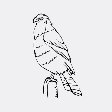 Hand-drawn pencil graphics, vulture, eagle, osprey, falcon, hawk, scavenger, condor, karkar, kite. Engraving, stencil style. Bird predator. Black and white logo, sign, emblem, symbol. Stamp, seal. Simple illustration. Sketch. Illustration