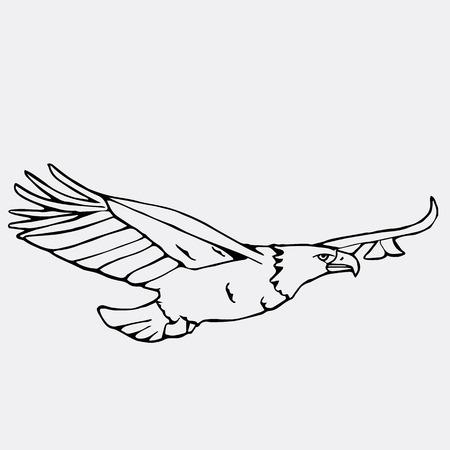 scavenger: Hand-drawn pencil graphics, vulture, eagle, osprey, falcon, hawk, scavenger, condor, karkar, kite. Engraving, stencil style. Bird predator. Black and white logo, sign, emblem, symbol. Stamp, seal. Simple illustration. Sketch. Illustration