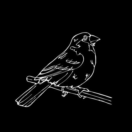 Hand-getrokken potlood graphics, vogel, leeuwerik, wielewaal, chickadee, mus, merel, nachtegaal, vink, gors, hangbird, distelvink, raaf, ekster, specht, kanarie, goudvink, sijs. Graveren, stencil-stijl. Zwart en wit embleem, teken, embleem, symbool. St