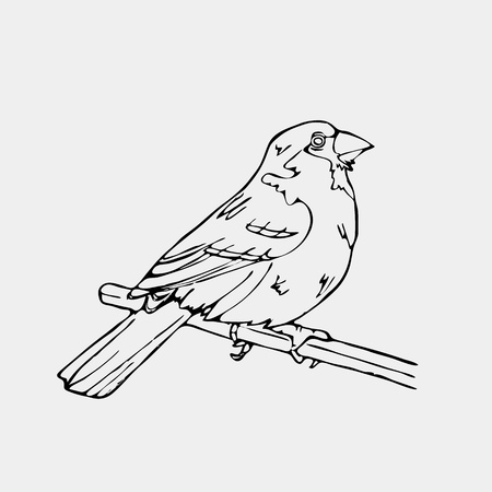 Hand-drawn pencil graphics, bird, lark, oriole, chickadee, sparrow, blackbird, nightingale, finch, bunting, hangbird, goldfinch, raven, magpie, woodpecker, canary, bullfinch, siskin.