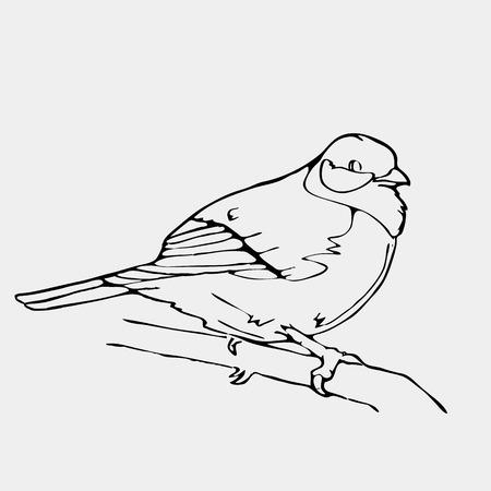 finch: Hand-drawn pencil graphics, bird, lark, oriole, chickadee, sparrow, blackbird, nightingale, finch, bunting, hangbird, goldfinch, raven, magpie, woodpecker, canary, bullfinch, siskin.