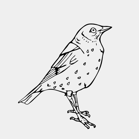 Hand-drawn pencil graphics, bird, lark, oriole, chickadee, sparrow, blackbird, nightingale, finch, bunting, hangbird, goldfinch, raven, magpie, woodpecker, canary, bullfinch, siskin.