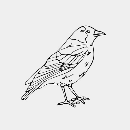 Hand-drawn pencil graphics,small bird, jackdaw, magpie, bird, blackbird, nightingale, crow. Engraving, stencil style. Black and white logo, sign, emblem, symbol. Stamp, seal. Simple illustration. Sketch.