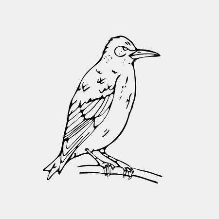 Hand-drawn pencil graphics,small bird, starling, woodpecker, oriole.